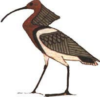 Akh, as the crested ibis