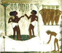 Workers tread grapes for a noble's estate. Egyptian wines were labeled with date, vineyard and variety for tax assessors, not connoisseurs